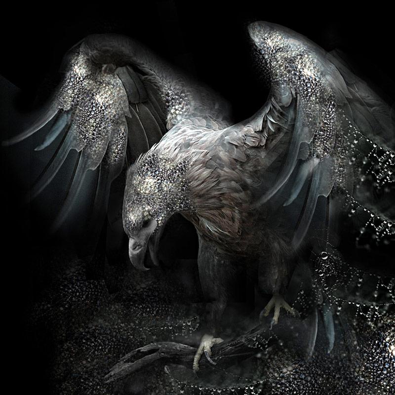 Eagle - Black Jungle