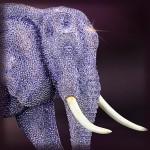 Tanzania - Elephant